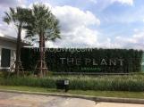 The plant นวมินทร์ เดอะแพลนท์นวมินทร์ 86 โลตัส